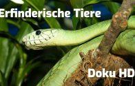 Faszinierende und erfinderische Tiere –  Doku deutsch HD Tierwelt Dokumentarfilm