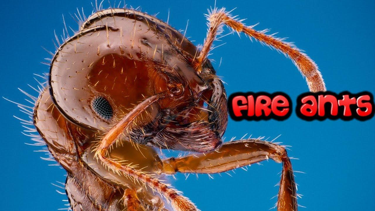 Ameisen Doku