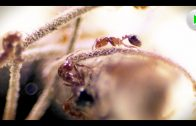 Fire Ants – Die unbesiegbare Armee – Natur Doku in voller Länge I Dokumentarfilm Tiere HD 2018