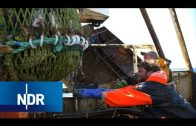 Fischfang auf der Hochsee: Was treibt Männer in die Fischerei? | 7 Tage | NDR Doku