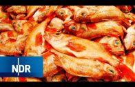 Fischfang: Vom Hamburger Fischmarkt auf den Teller   Wie geht das?   NDR