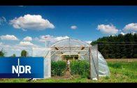 Traum vom eigenen Acker: Wie Jungbauern in Mecklenburg einen Hof übernehmen | NaturNah | NDR Doku