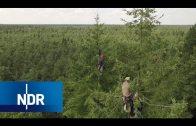 Die Zapfenpflücker – Ernte in den Wipfeln von Norddeutschland | NaturNah | NDR Doku