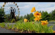 Tschernobyl – Die Natur kehrt zurück – Doku/Dokumentation