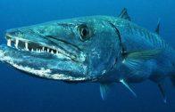 Gefährliche Raubtiere ➥ Doku / Jäger in der Karibik / HD