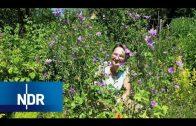 Geheimnisse des Naturgartens | NaturNah | NDR Doku