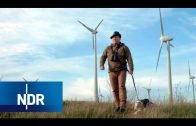 Wildvögel gegen Windräder | NaturNah | NDR