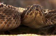Die gefährlichsten Tiere des Amazonas
