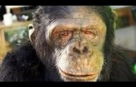 History Documentary Films Ape to Man: First Boom National Geographic