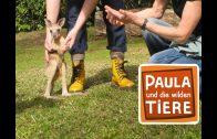 Hüpfen wie ein Känguru  | Reportage für Kinder | Paula und die wilden Tiere