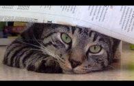 Hund oder Katze, wer ist klüger? / Doku