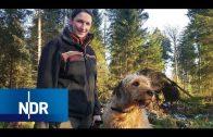 Im Oberharz – Der Aufschwung von Wildemann | die nordstory | NDR Doku