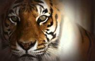 In den Klauen des Tigers   Doku über das Überwinden der eigenen Ängste