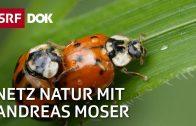 Invasive Arten in der Schweiz (2/2) | NETZ NATUR mit Andreas Moser | Doku | SRF DOK