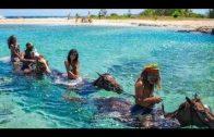 Jamaika Die wilde Schöne der Karibik [Natur & Kultur Doku]