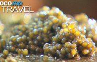 Kaviar – Der Schatz aus dem Iran (360° – GEO Reportage)