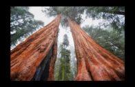 Keine Wälder auf der Erde (komplett)(Tor Segelohrenbob)