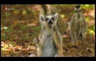 Madagaskar HD Tier vesves Natur Doku 2017