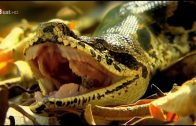 Madagaskar Tier & Natur Dokumentation HD