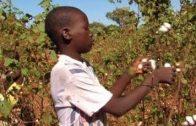 makro – 100 Prozent Baumwolle – Afrikas Kindersklaven