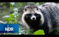 Mecklenburg: Die Invasion der exotischen Tiere | NaturNah | NDR Doku