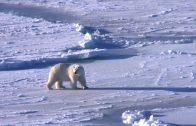 Mein Trip in die Arktis – Abenteuer im Ewigen Eis • Web-Doku