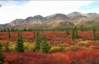 Meine Traumreise nach Alaska – Mit dem Hollandrad durch die Wildnis