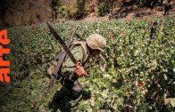 Mexico: Der Opium-Krieg | ARTE Reportage