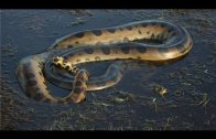 National geographic – Amazon River Documnetary – BBC wildlife animal documentary