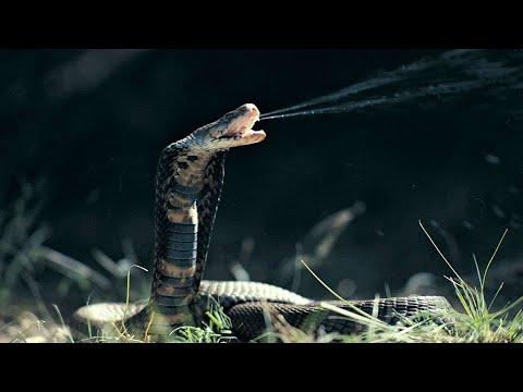 Neu! Die Waffen der Tiere Doku 2018 HD