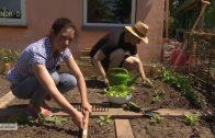 (Neue Doku!) NaturNah – Neustart im Kleingarten