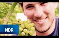 Weinanbau in Schleswig-Holstein | NaturNah | NDR Doku