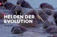 3Sat Doku – Helden der Evolution (2/3): Meeressäuger