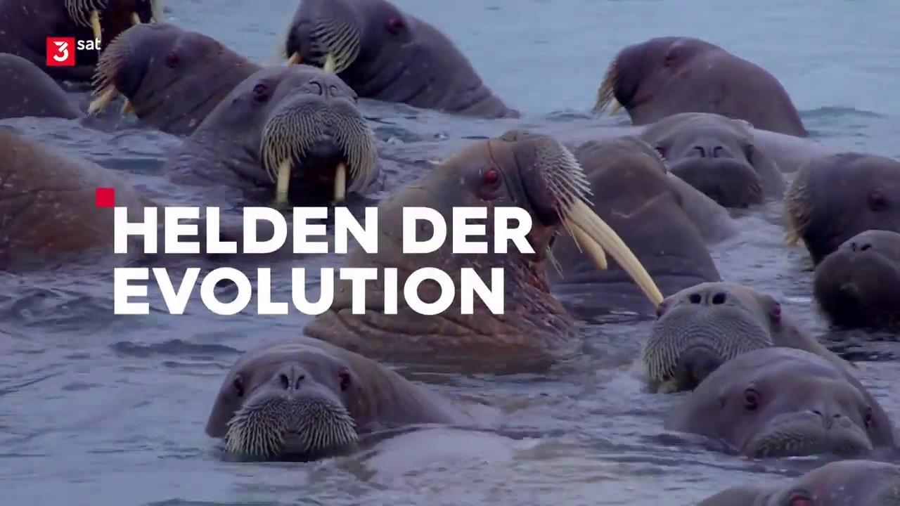 Doku Evolution