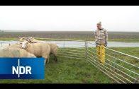 Bauernhof: Hilfseinsatz bei den Schafen   Hofgeschichten   NDR Doku