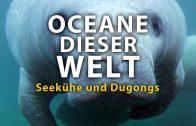 Ozeane dieser Welt – Seekühe und Dugongs (2011)    Film