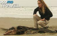 Peru – Delfine in Gefahr (360° – GEO Reportage)