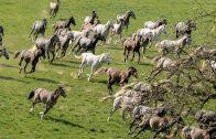 Pferde Doku | Weiße Pferde, blaue Reben | In der Heimat der Lipizzaner und des Schilchers