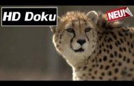 Phantome der Wüste – Asiens letzte Geparde (ARTE Doku in HD / 2016)