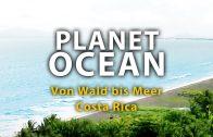 Planet Ocean – Von Wald bis Meer (2011)  | Film
