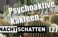 Psychoaktive Kakteen / Christian Rätsch und R. Gordon Wasson | Nachtschatten Television (27)