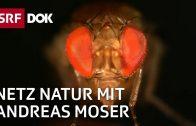 Invasive Arten in der Schweiz (1/2) | NETZ NATUR mit Andreas Moser | Doku | SRF DOK