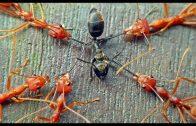 Krieg der Ameisen Natur im Wald – Doku Deutsch