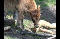 Die schönsten Tierbabies (komplette Dokumentation, kostenlos auf deutsch, in voller Länge)