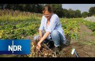 Alte Gemüsesorten retten | NaturNah | NDR Doku