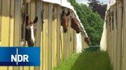 Schwertransport im Pferdesport | die nordreportage | NDR Doku