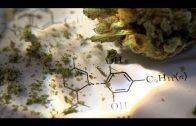 So gesundheitsschädlich ist Cannabis wirklich!! [Neu] Doku 2017