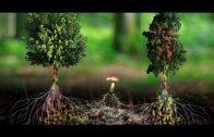 Wie Pflanzen untereinander kommunizieren Doku