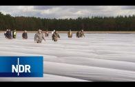 Spargel: 12 Wochen bei der Feldarbeit | die nordstory | NDR