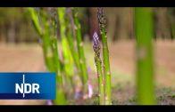 Spargel: Anbau, neue Sorten, Geschmack | 45 Min | NDR